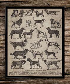 Vintage breeds of dogs animal poster dog breeds breeding home decor office decor dog lover dog poster dog print dog wall art farm vintage