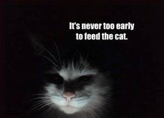 It Is Never Too Early...so true! Omg...this it's so Mackenzie's cat! As soon as he hears us moving around...it's MEOW MEOW!!!