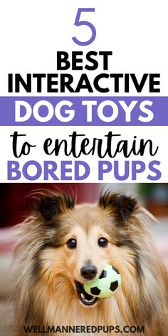 Top 5 best interactive dog toys to combat boredom and keep your dog entertained! Small Dog Toys, Small Puppies, American Alsatian, Dog Enrichment, Dog Puzzles, Interactive Dog Toys, Standard Poodles, Dog Care Tips, Creative Activities