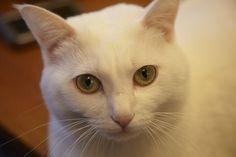 #neko #cat  ilove.cat/ja/4059