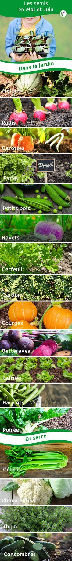 le goût juteux! un bonheur Bleu concombres récoltes dans son propre jardin