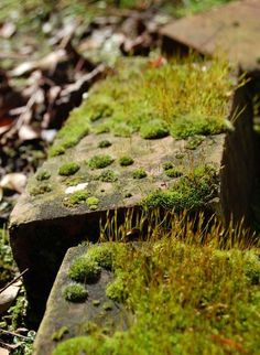How to Grow Moss: 12 oz. beer + 1/2 tsp. sugar+ clumps of moss - or - 3 Handfuls of Moss+3 cups lukewarm water+3 tbsp water-retention gardening gel+1/2 cup buttermilk
