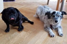 Die Institutshunde Pluto und Sally freuen sich ganz besonders auf den Sommer und können es kaum erwarten im Garten des neuen Instituts in Pinkafeld zu spielen 😊 Animals, Dog Anxiety, Counseling Psychology, Playing Games, Summer, Animales, Lawn And Garden, Animaux, Animal