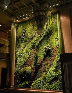 Living Wall by Patrick Blanc.  He doesn't just put plants on a wall, he creates a composition with texture and color.