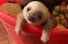 Animales tan pequeños que caben en la palma de la mano: 10 increíbles fotos | Vida Salvaje