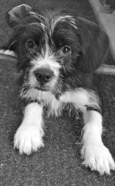Who? Me? Adoption, Dogs, Animals, Foster Care Adoption, Animales, Animaux, Animal Memes, Animal, Pet Dogs