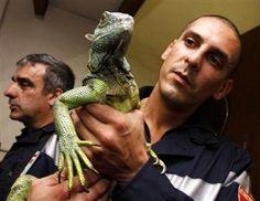 Monaco Les pompiers face au danger de ces drôles d'animaux de compagnie