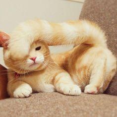 Cat In Bread Box 140 Best Cat Breading Images On Pinterest  Baby Kittens Cat Bread
