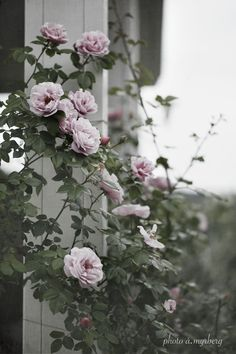 Every beautiful cottage garden has common principles that make them a success. Learn about the fundamentals you need to create your very own cottage garden. Outdoor Plants, Outdoor Gardens, Garden Design Software, Rose Garden Design, Backyard Ideas For Small Yards, Garden Stand, Garden Care, Gerbera, Back Gardens