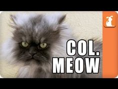 Colonel Meow - Meme'd, so....much....fluffy....