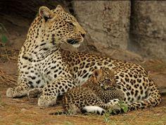 Sonai Rupai Wildlife Sanctuary - in Assam, India