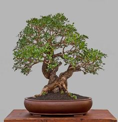 From the Bonsai Academy in Croatia