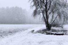 Morning homestead by marinasurniene. Please Like http://fb.me/go4photos and Follow @go4fotos Thank You. :-)