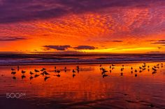 Seagulls at Sunset in Oceanside - January 2, 2017 - Oceanside    January 2, 2017      Photo: ©2017 Rich Cruse \ CrusePhoto.com