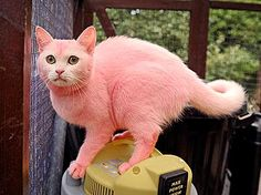 www.cats and dogs are friendly.com | ... Cat Dyed Pink to Match Owner's Hair; Plus, America's Most Dog-Friendly