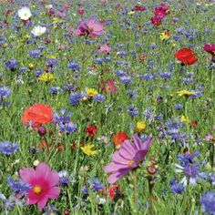 Butterflies Floral Meadow Mix
