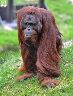List Of Animals, Save Animals, Animals And Pets, Funny Animals, Unusual Animals, Majestic Animals, Mountain Gorilla, Animal Species, Wild Nature