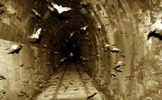 Bats flying in a dark tunnel Dracula, Creatures Of The Night, Foto Art, Macabre, Belle Photo, Dark Art, White Photography, Scary, Wildlife