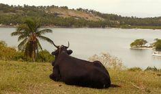 Haiti, ile à la Vache, un paradiso con un lato oscuro