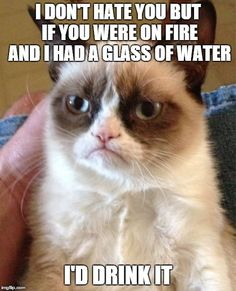 Grumpy Cat Meme | I DON'T HATE YOU BUT IF YOU WERE ON FIRE AND I HAD A GLASS OF WATER I'D DRINK IT