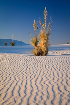 White Sands National Monument, New Mexico..Loved the days I get to go to the beautiful dunes.. yesterday was one of them! :)