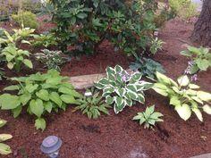 Hosta garden shared by Mary Pinkston.  www.hostasdirect.com #hostas #garden #landscape Hosta Gardens, Garden Pictures, Outdoor Ideas, Mary, Landscape, Plants, Scenery, Landscape Paintings, Planters