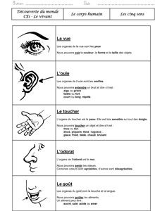Science infographic and charts DDM – Les cinq sens … Infographic Description DDM – Les cinq sens Plus – Infographic Source – French Teaching Resources, Teaching French, French Practice, Cycle 3, Worksheets For Kids, Fun Learning, Infographic, Teacher, Education