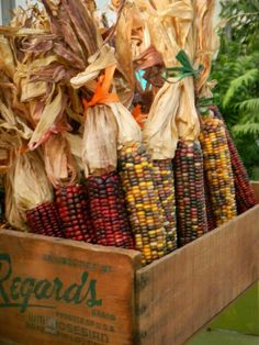 For the love of everything Fall/Autumn/Halloween Harvest Time, Fall Harvest, Harvest Corn, Photo Deco, Purple Home, Autumn Decorating, Decorating Ideas, Happy Fall Y'all, Autumn Inspiration