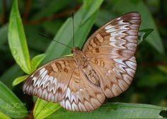 Butterfly by ohsoonann