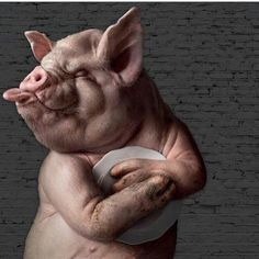 Funny animal photo manipulation by Post Production - Sao Paulo, advertising agency Pig Art, Best Ads, Creative Advertising, Advertising Agency, Advertising Design, Hd Picture, Print Pictures, Print Ads, Photo Manipulation