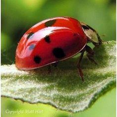 lady bug!!!