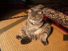 30 Cats Sitting Like Humans