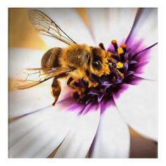 Acrylic Wall Art, Wood Wall Art, Acrylic Paintings, Watercolor Paintings, Thing 1, Bee Art, Flower Invitation, Wood Canvas, Photo On Wood