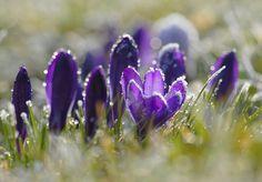 Spring Fever in 58 Amazing Photos