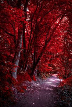 Through the Bloodred Forest…. by Aenea-Jones The post Through the Bloodred Forest…. by Aenea-Jones autumn scenery appeared first on Trendy. Beautiful Nature Wallpaper, Beautiful Landscapes, Beautiful Images, Beautiful Landscape Photography, Aesthetic Colors, Aesthetic Pictures, Trees With Red Leaves, Autumn Scenes, Red Wallpaper