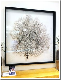 DIY Sea Fan Art by Sand & Sisal. This tutorial will save you several hundred dollars!