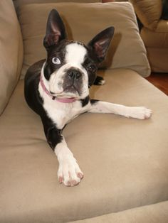 anglais bull terrier pattes coeurs J/'aime mon chien porte-clés chiens français bulldogs
