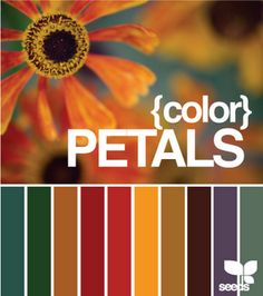 Petals Color Inspiration