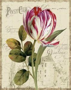Postcard.02.of.02.Tulip