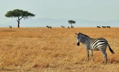Think beyond basic camps and upgrade to true luxury when planning your African safari! These four top the list when it comes to the best safari in Africa. Nairobi, Le Baobab, Safari Holidays, Anime Sensual, Tanzania Safari, Rich Life, Parc National, Game Reserve, Kenya