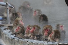 Hot Spring with Monkeys, Japan
