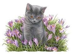 Bildergebnis für franciens katten