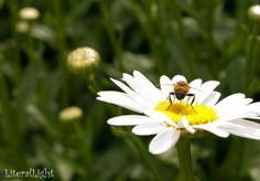 Little Bee Bum