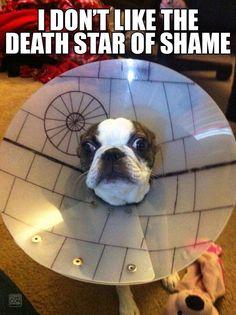 Cone of shame upgrade! #starwars