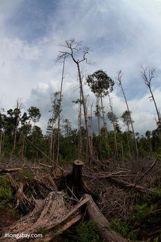 Devastated rainforest landscape in Borneo