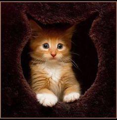cuteeeee!!!!!