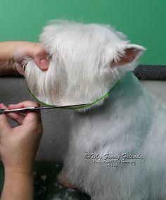 Is animal cuts good