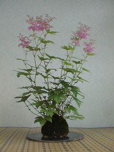 Bonsai Art, Bonsai Garden, String Garden, Mame Bonsai, Small Trees, Cool Plants, Ikebana, Flower Designs, House Plants