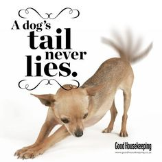 """A dog's tail never lies."""