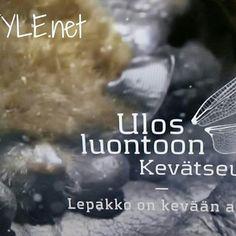 YLE TV1 ULOS LUONTOON, Kevät Seuranta 3/5 jakso LEPAKKO Kevään airut. Info @yleluonto ja BLOGI...Seuraan, Viihdyn&Suosittelen. Elämäntapa&tyyli. Sinun? Nähdään...HYMY #tv #kevät #ulosluontoon #luonto #eläimet #lepakot #nisäkäs #yöeläimet #riistakamera #lepakkotutkija #tutkimus #tieto #elämä 💓💡📷👀🔝🔑☺😉🙋